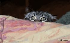 This cat who just wants to watch you sleep. | Community Post: 13 Socially Awkward Animals With Ultimate Creeper Tendencies