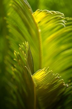 Beauty In The Sunlight - Deb Halloran Chartreuse Color, Green Colors, World Of Color, Color Of Life, Photographie Macro Nature, Foto Macro, Green Garden, Mellow Yellow, Pantone Color