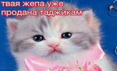 Meme Pictures, Weird Pictures, Reaction Pictures, Im Stupid, Stupid Memes, Hello Memes, Funny Cartoon Memes, Happy Memes, Russian Memes