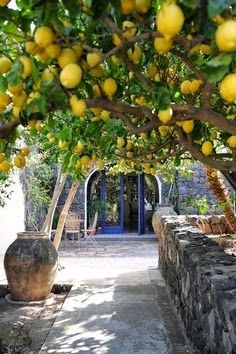 .Can imagine this being perhaps in Italy, Greece where the family would gather under the lemon tree although I can only picture the long table and many chairs.