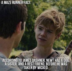 the maze runner - newt