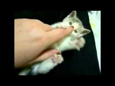 [VIDEO] OH NO NOT ANOTHER TOP 10 CUTEST KITTEN VIDEO - http://www.kittensinlove.com/video-oh-no-not-another-top-10-cutest-kitten-video/