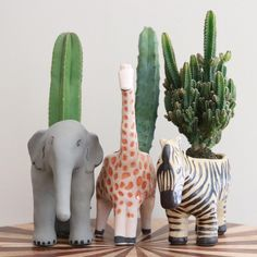 succulents in cute animal planters