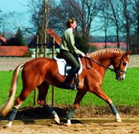 Tips for Training the Young Horse