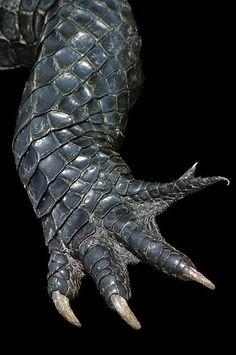 alligator leg. http://images6.fanpop.com/image/photos/32800000/alligator-claw-swamp-witch-fans-32865377-531-800.jpg