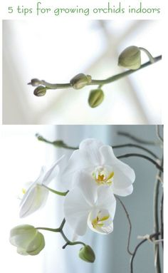 I'm going to try some of her husbands tricks for growing orchids indoors. I've always wanted them in my room but never had any tricks for keeping them alive!