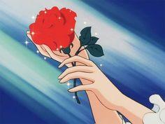 eine rose wurd immer eine rose bleiben ob sie wil order nicht