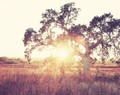 Landscape photography autumn oak tree wall art rust brown gold living room decor 'Into the Light'