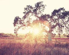 "Landscape photography | oversized art | rust brown gold decor | autumn tree wall art ""Into the Light"""
