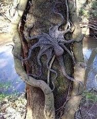 Whip-Tailed Tree Octopus. Can survive on both land and sea.