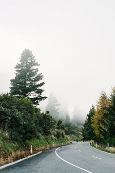 Misty coastal forest