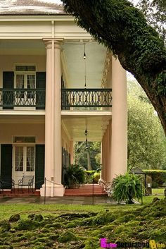 The quarter-mile canopy of giant live oak trees, believed to be nearly 300 years old, forms an impressive avenue leading to the classic Greek-revival style antebellum home.