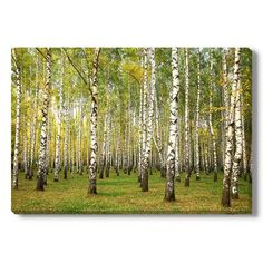 "Gallery Direct Evening Autumn Birch Forest in Sunlight Photographic Print on Wrapped Canvas Size: 32"" H x 48"" W x 1.5"" D"