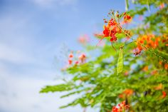 Flowers at Phoenix Island in Sanya. #Sanya #China #Whererefreshingbegins #Beautiful #Nature #Travel #Hainan #Destination #sanyarepin #sanyaheartstohearts