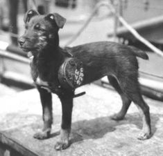 'Knobby,' a mongrel pup, mascotted a Coast Guard Rescue Cutter that crossed the English Channel to the coast of France on D-Day. Wearing his specially-made life preserver, 'Knobby' stayed right in there barking during those critical days when the beachhead in Normandy was established and when the Coast Guard Rescue Flotilla saved the lives of more than 750 American and Allied invaders from the channel.""