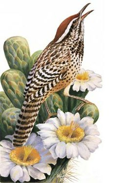 arizona state bird cactus wren on arizona state flower