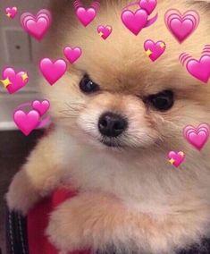 soft meme, soft memes e wholesome meme imagem no We Heart It Cute Love Memes, Cute Quotes, Flirty Memes, Heart Meme, Current Mood Meme, Crush Memes, Boyfriend Memes, Wholesome Memes, Stupid Memes