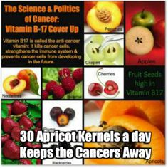 30 Apricot Kernels a day Keeps the Cancers Away. The Seeds Banned by The FDA. Truth From a 40-Year-Long Cover-Up Revealed vitb17. B17It's hard to believe, but one of the most reliable, safe, and inexpensive solutions for cancer has not only been marginalized by mainstream oncology, but by the alternative health crowd as well. Some insiders, even those among the well trained medically, decry laetrile or apricot seed effectiveness while fear mongering its supposed toxic elements…