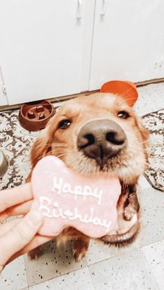 say happ bday pls Animals And Pets, Baby Animals, Funny Animals, Cute Animals, Animals Planet, Cute Puppies, Cute Dogs, Dogs And Puppies, Doggies