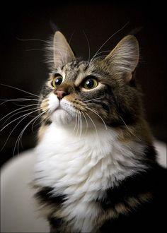 . #cats #kittens #kitty #cute #buzzkitty #cutest #funny