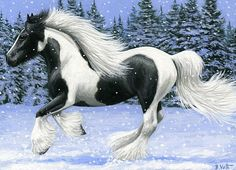 WINTER RUN......this gypsy horse is enjoying a spirited romp in the winter snow....PRINTED