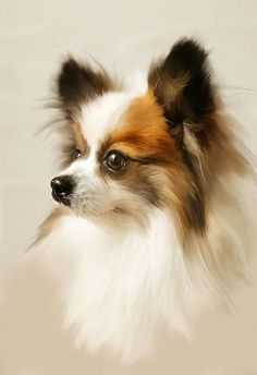 Chihuahua - Rembrantus The art of realistic portrait painting Perro Papillon, Papillion Dog, Animal Paintings, Animal Drawings, Loro Animal, Animals Watercolor, Painting Gallery, Dog Portraits, Little Dogs