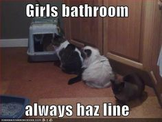Haha!!! #cat #humor #cats #funny #lolcats #meme #cute #quotes =^..^=  www.zazzle.com/kittypretttgifts