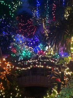 Light show at Gaiser Conservatory Manito Park, Spokane WA