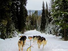 Dog sledding through Stillwater State Forest on a visit to Whitefish is a fun Montana winter adventure.