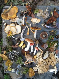 Fungi of Saskatchewan