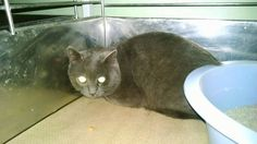 ASHLY HAS BEEN RESCUED BY COLUMBUS HUMANE SOCIETY FOR LOCAL MAINTAINED PLACEMENT.