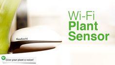 Koubachi - Interactive Plant Care - a wi-fi sensor for your PLANTS! :)