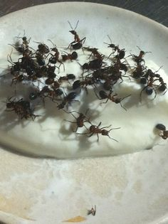 "Photo from Noma's Food Lab in Copenhagen. Live ants and yogurt. I keep thinking about the ""POP"" of the ants."