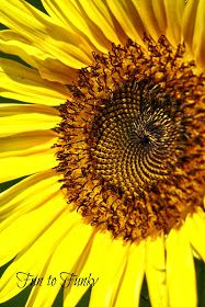 Fun to Funky: Mammoth Sunflowers + My Tips! Mammoth Sunflower, Learn To Paint, Mother Nature, Dandelion, Backyard, Patio, Sunflowers, Thunderstorms, Landscape