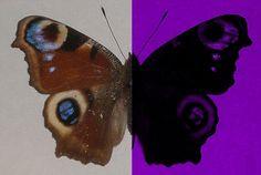 Πως βλέπουν τα ζώα; | Otherside.gr (5)