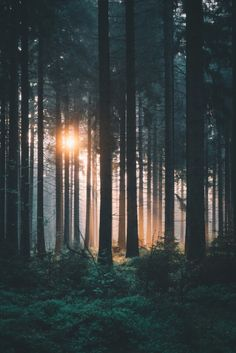 Morning light by Tumblr Photography, Nature Photography, Beautiful Landscapes, Beautiful Images, Morning Light, Nature Wallpaper, Trendy Wallpaper, The Great Outdoors, Aesthetic Wallpapers
