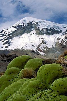 Bolivia, Sajama , Moss covered rocks beneath Sajama Mountain.