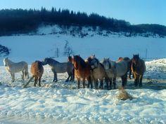 Home - Kirkcarrion Highland Ponies