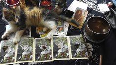Kätzchen Glücksi will beim Wochenorakel helfen!