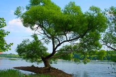 """Majestic Tree Along the Bank of the James River"" (near Richmond) by Katie Sitterson, featured in the Richmond Times-Dispatch on August 6, 2016. FUN FACT: This is a 2016 Virginia Vistas Photo Contest Honorable Mention winner in our Scenic Trees Category. ENJOY!! ‪#‎VirginiaVistas‬"