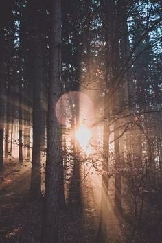 30 ideas for forest photography - # for 30 ideas for . - 30 ideas for forest photography – photography 30 ideas for forest photog - Forest Photography, Landscape Photography, Photography Tips, Nostalgia Photography, Morning Photography, Camping Photography, Scenic Photography, Outdoor Photography, Abstract Photography