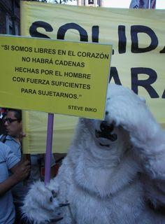 Oso polar de Greenpeace