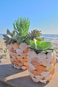 Una buena forma de decorar algún tiesto. Pegando conchas de caracol.