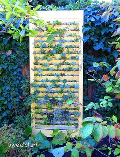 Succulent shutter door, I have a few shutters laying around and may give this a try.