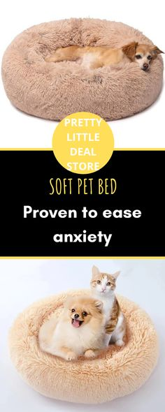 Animals And Pets, Baby Animals, Menopause Humor, Memories Quotes, Sleeping Dogs, Cat Furniture, Yorkies, Pet Stuff, Kitty Cats