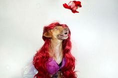 Pin for Later: Even Your Dog Can Be a Disney Princess This Halloween