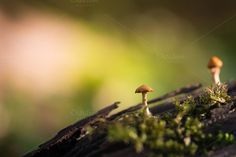 Check out Mushrooms by Screeny's Photo Bucket on Creative Market
