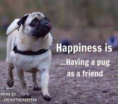 Get great suggestions on pug dogs. They are actually offered for you on our inte… Get great suggestions on pug dogs. They are actually offered for you on our internet site. Pug Puppies, Chihuahua, Miniature Pug, Pug Quotes, Pugs And Kisses, Baby Pugs, Pug Art, Cute Pugs, Funny Pugs