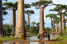 Das sind die 16 schönsten Bäume auf der Welt. | StoryFox