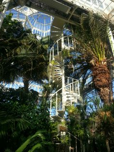 Sefton park palm house, Liverpool